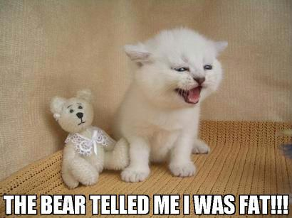 Caturday:  the bear telled me I was fat!!!