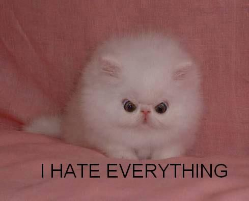 Caturday: I hate EVERYTHING