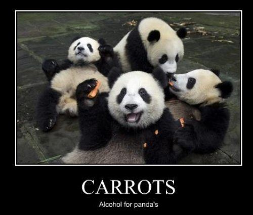 Panda Friday: Carrots and panda